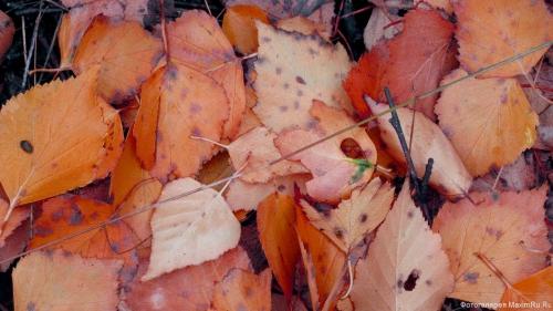Обои Красная листва
