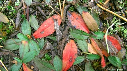 Обои Осенние листья