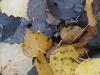 Обои Желтая палая листва