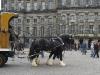 Фото Голландия Королевская площадь в Амстердаме