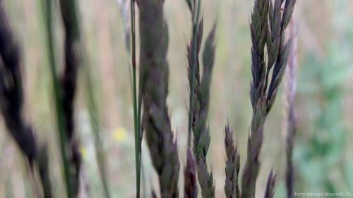 Ритм фото травы