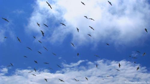 Чайки в небе фото