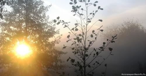Обои Восход в лесу